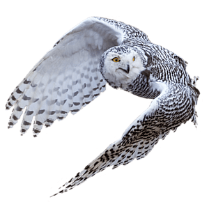 Open Sky Software Floating Owl
