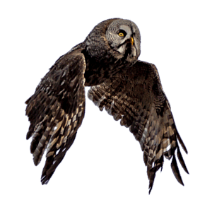 Open Sky C/C++ Consulting Page Floater Owl